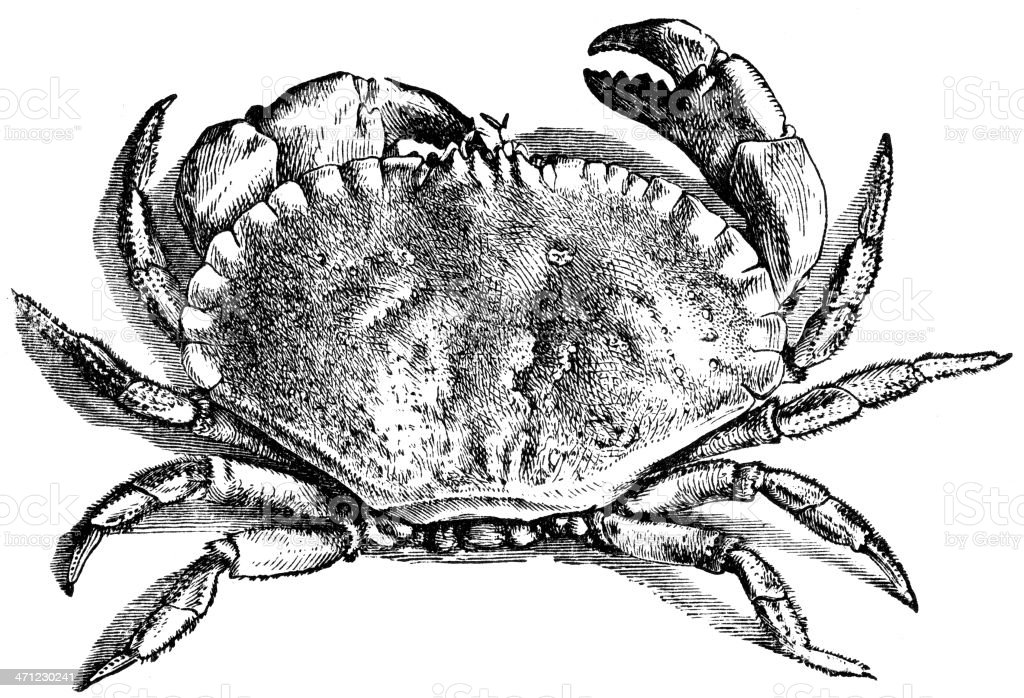 Black and white drawing of a crab from above royalty-free stock vector art