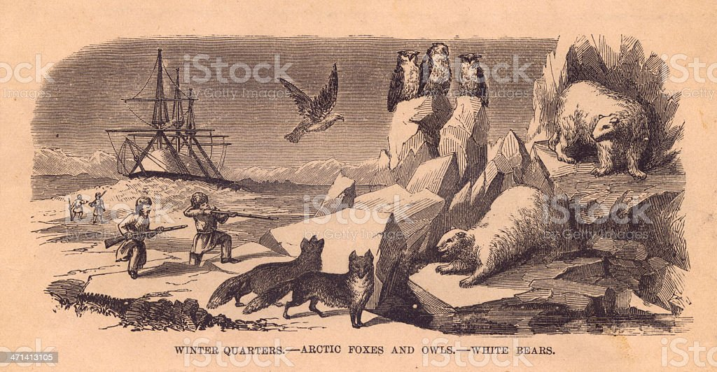 Black and White Illustration of Arctic Animals, From 1800's royalty-free stock vector art