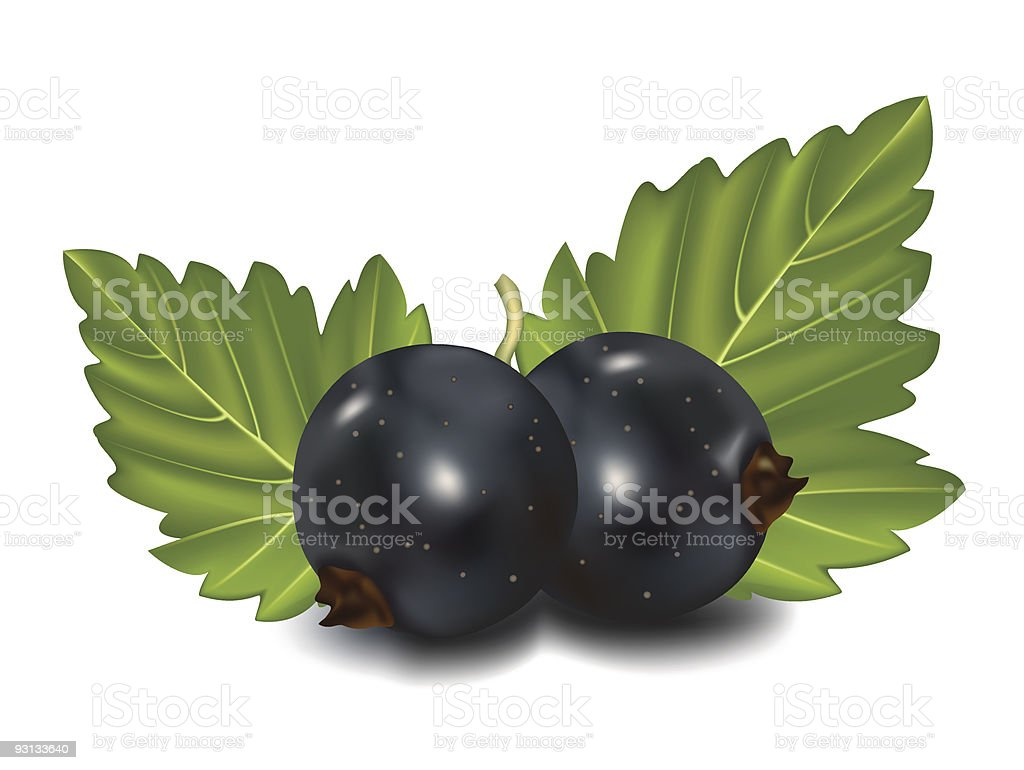 Black currant with green leaf. royalty-free stock vector art