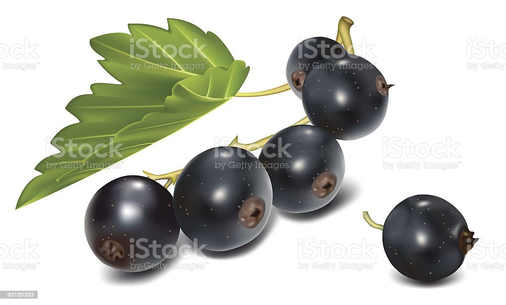 Black currant with green leaf . royalty-free stock vector art