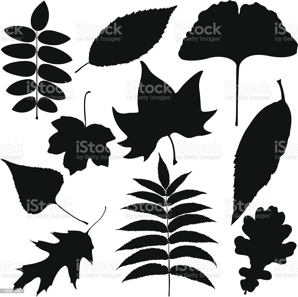 Black Leaves Outline vector art illustration