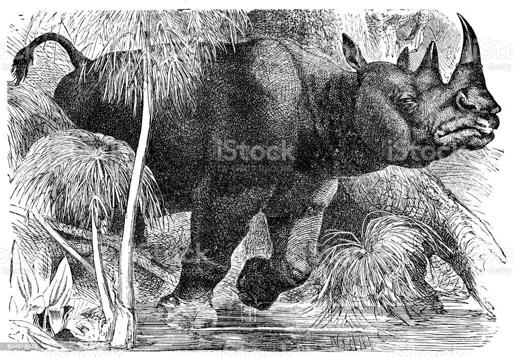 Black rhinoceros (Diceros bicornis) vector art illustration