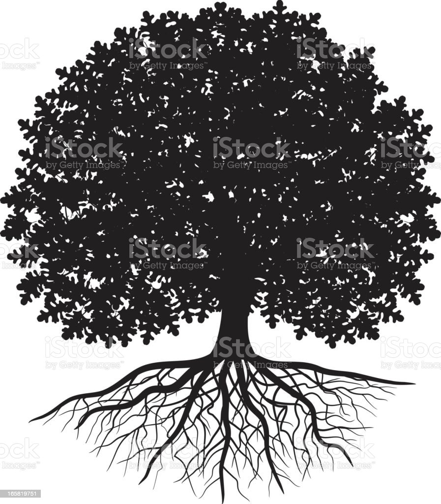 Black silhouette of oak tree with leaves and visible roots vector art illustration