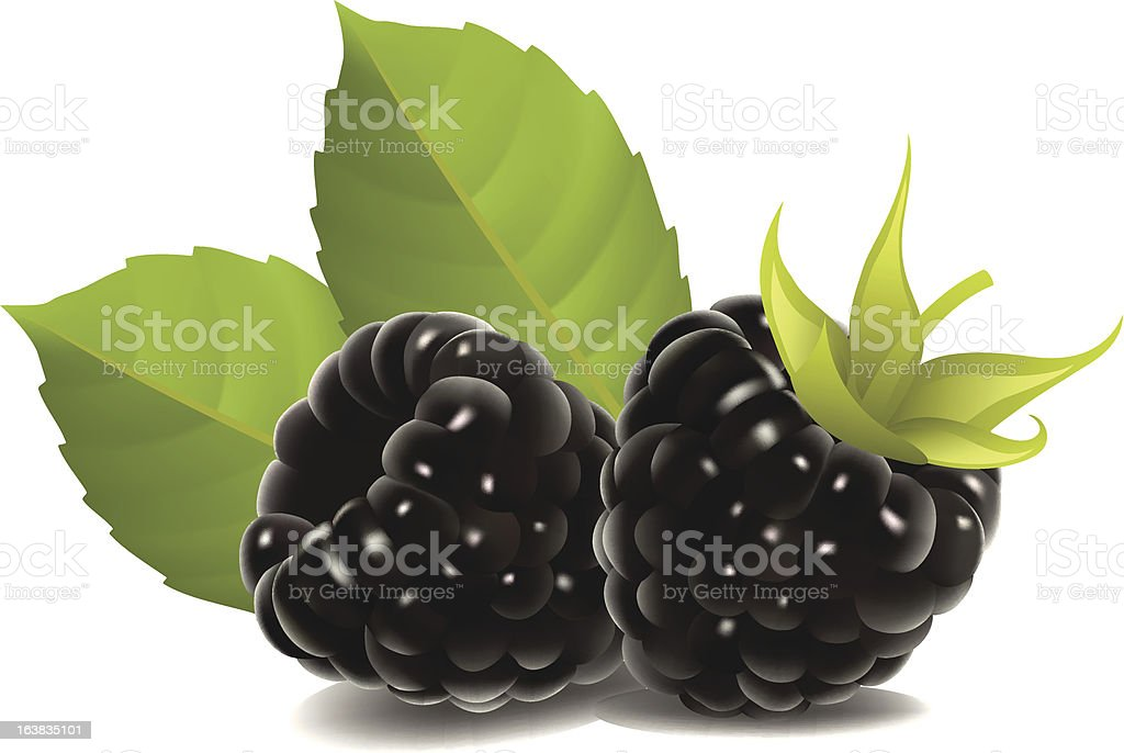 Blackberry royalty-free stock vector art