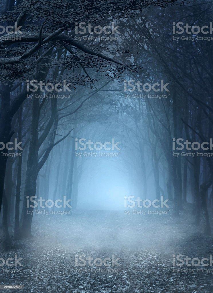 Blue foggy forest vector art illustration