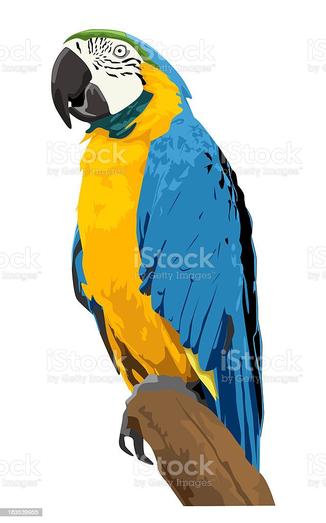 Blue & Gold Macaw (vector) vector art illustration