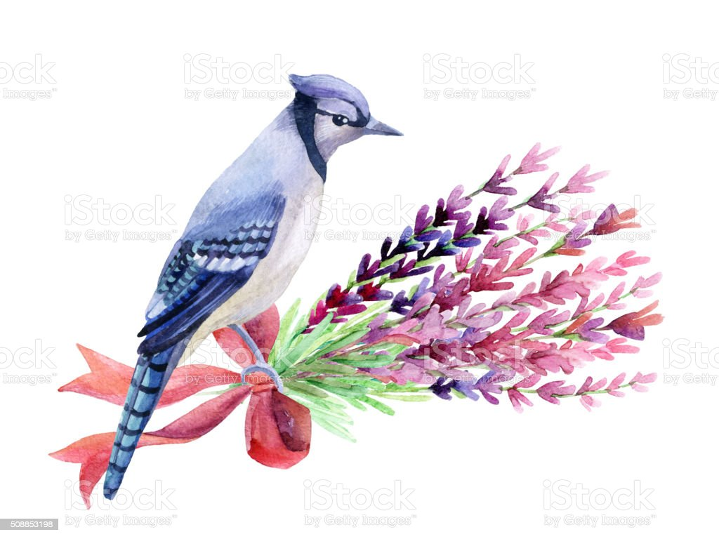 Blue jay isolated on a white background. vector art illustration