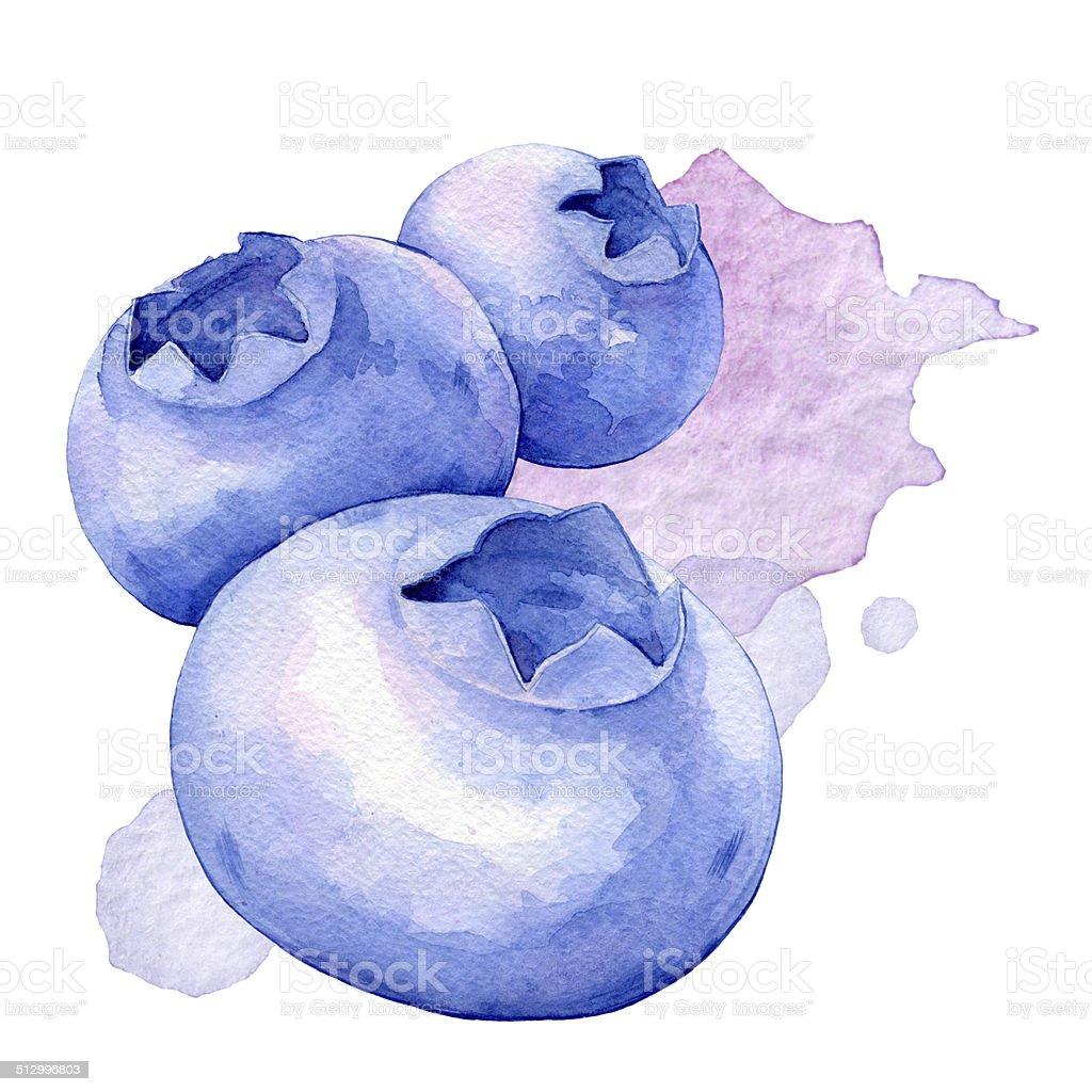 Blueberries. Watercolor illustration vector art illustration