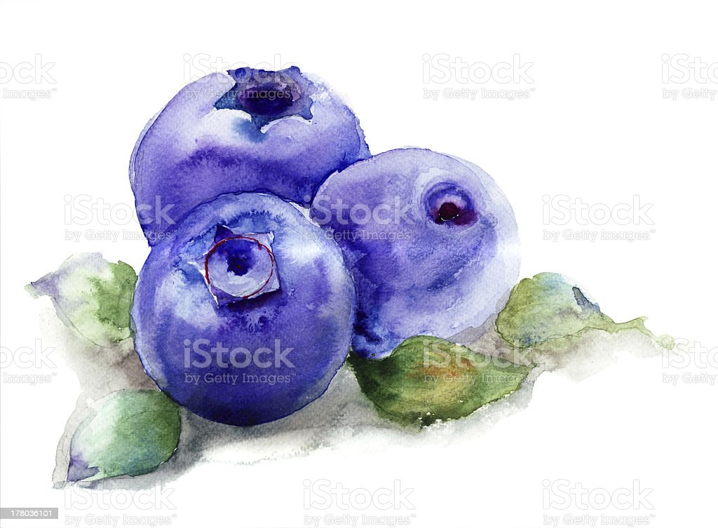 Blueberries with leaves vector art illustration