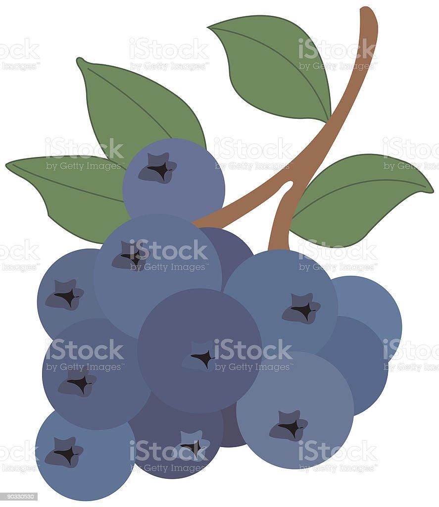 Blueberry royalty-free stock vector art