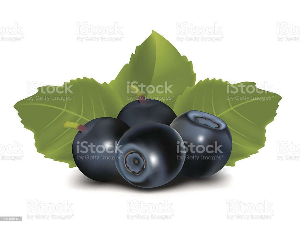 Blueberry with leaves royalty-free stock vector art