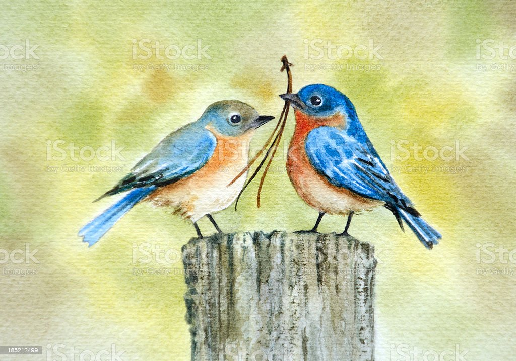 Bluebird Couple During Nesting Season vector art illustration