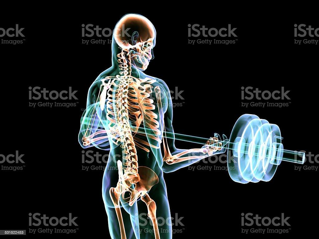 Body Builder's X-Ray Image vector art illustration