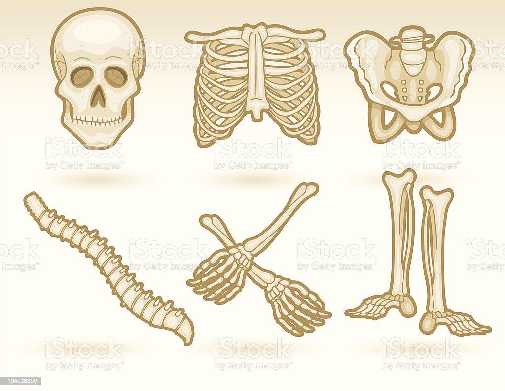 Bones royalty-free stock vector art