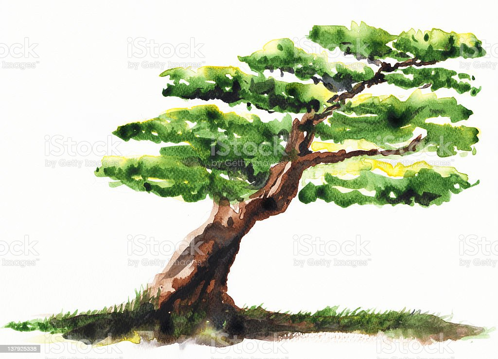 Bonsai tree watercolors style royalty-free stock vector art