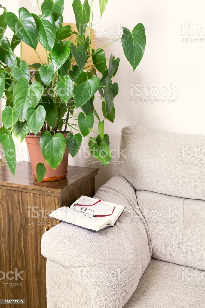 book and glasses on the top of the arm of a sofa stock photo