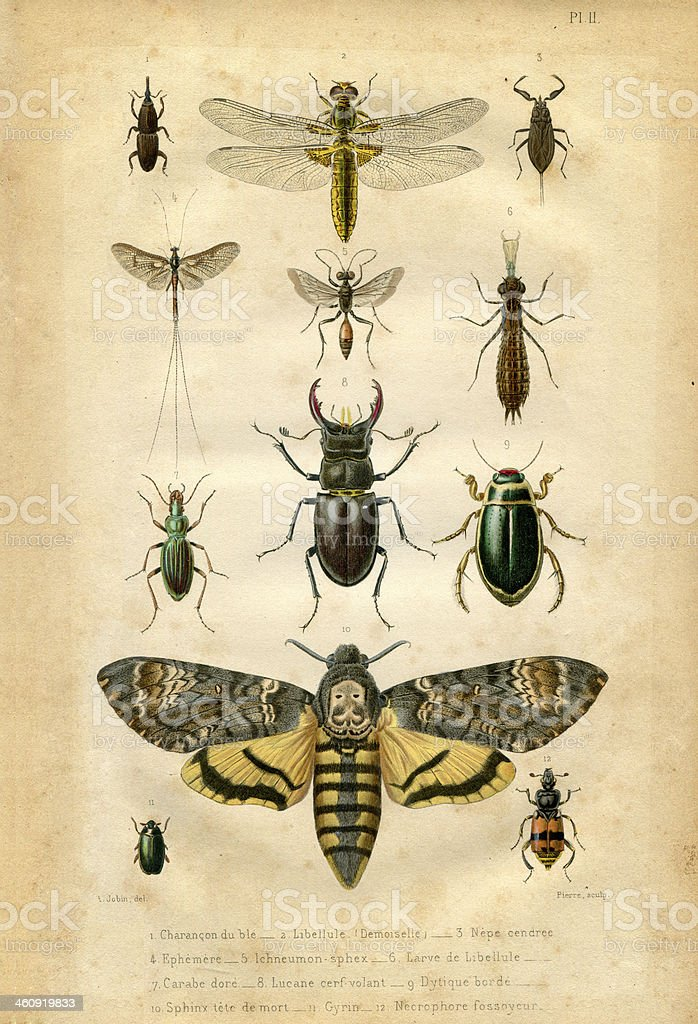Book plate : Insect and butterfly vector art illustration