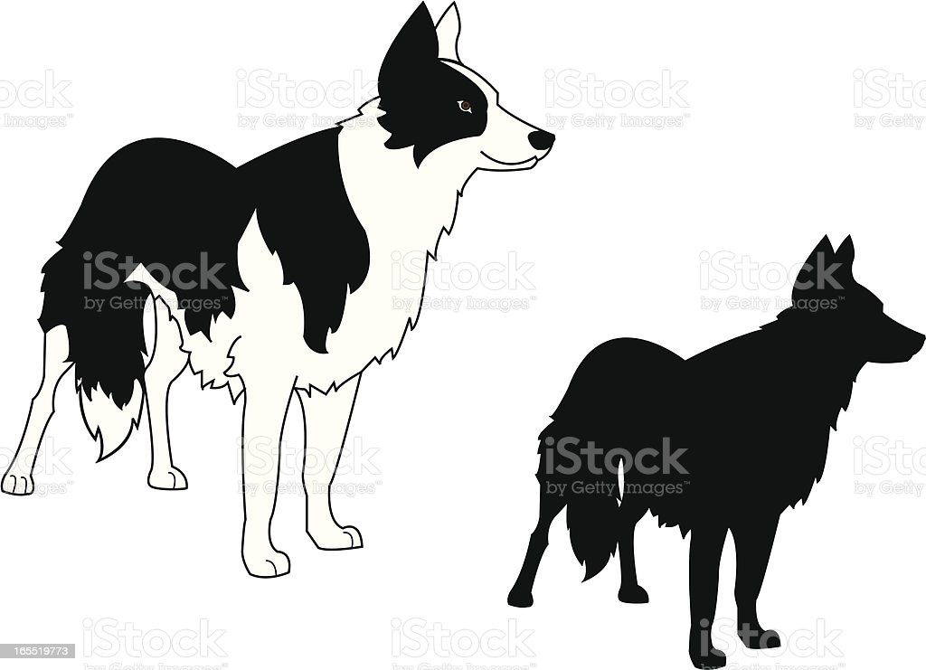 Border Collie Standing and Silhouette vector art illustration
