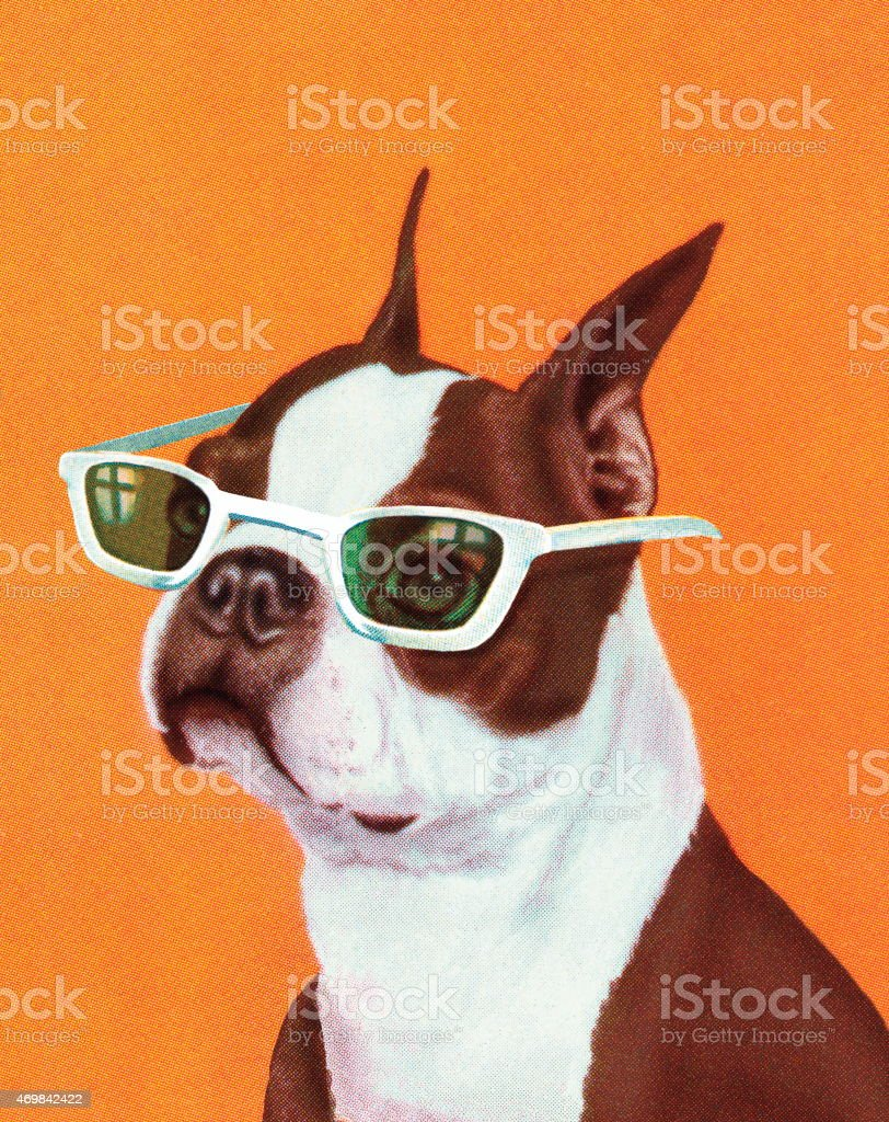 Boston Terrier vector art illustration