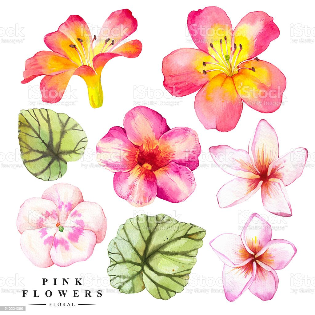 Botanical illustration with realistic tropical flowers and leaves. vector art illustration