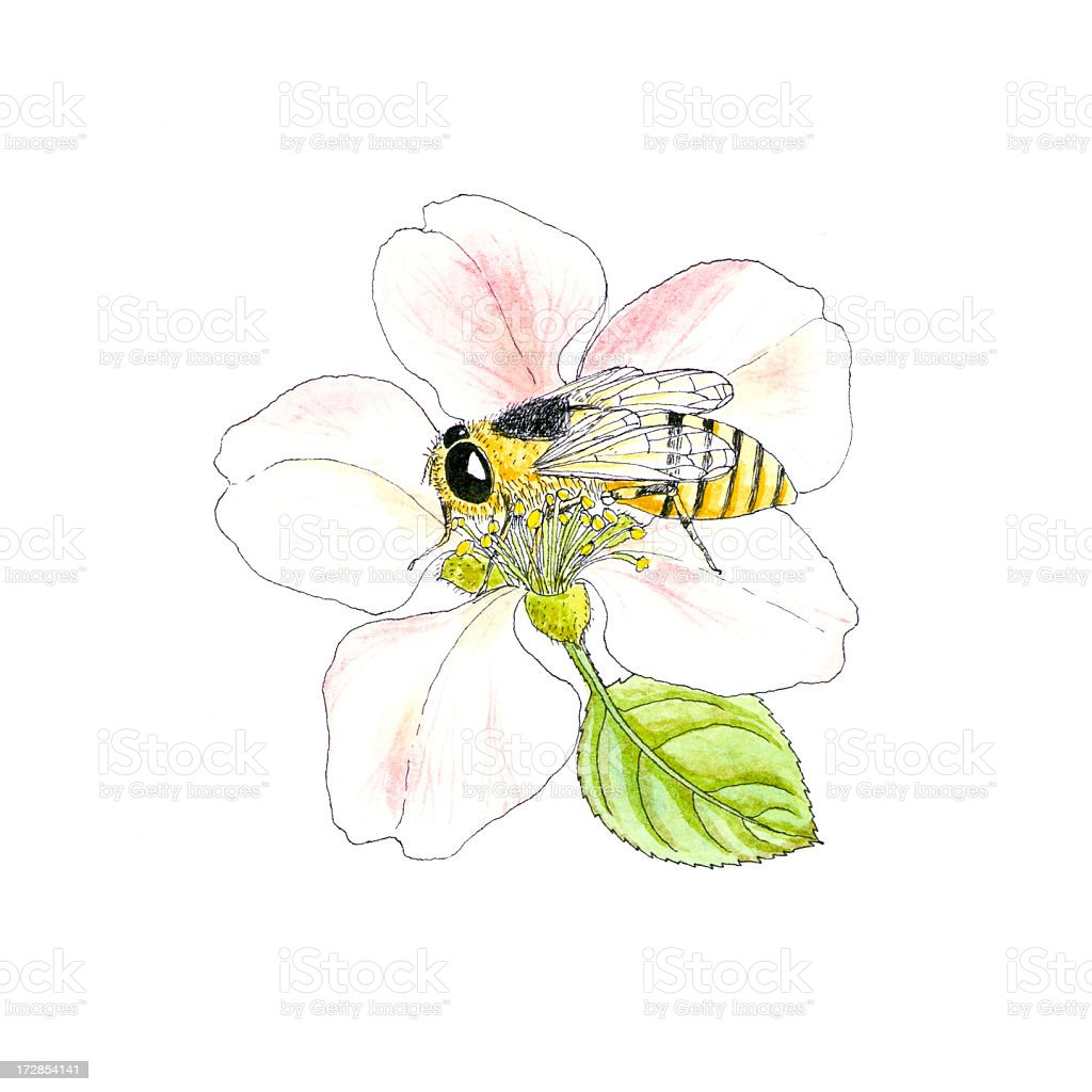 Botanical Plant & Bee. vector art illustration