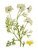 Botanical Plant.