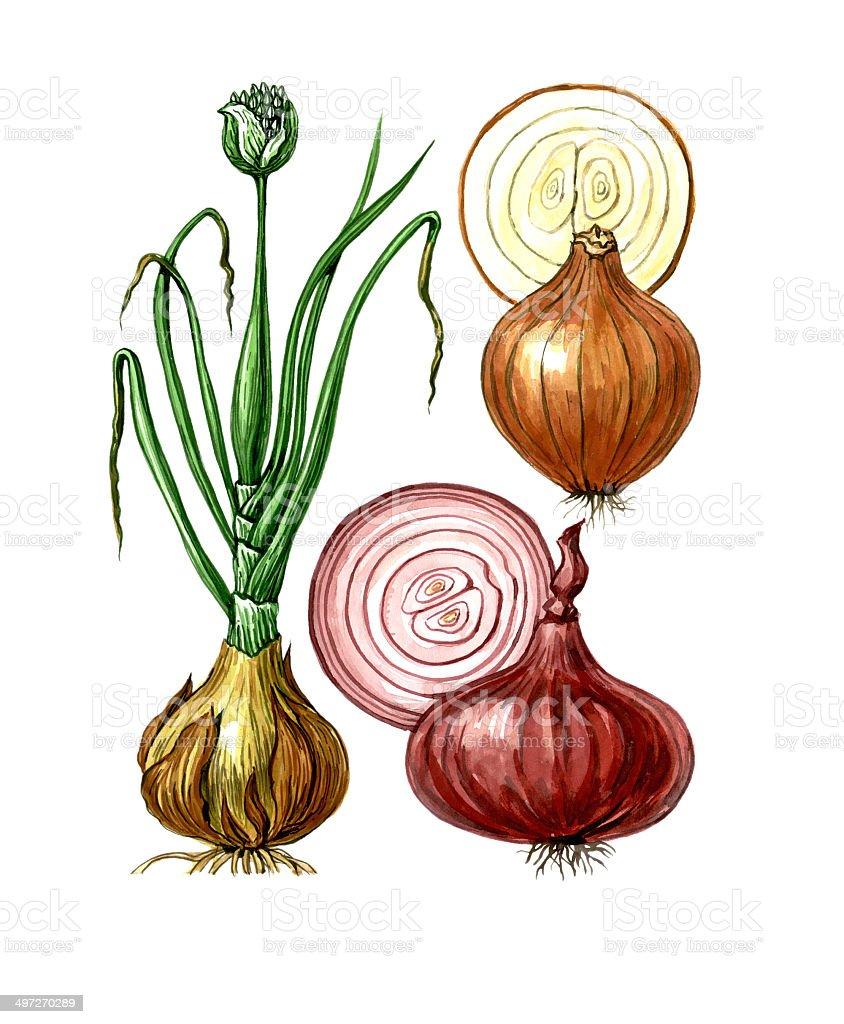 Botany vector art illustration