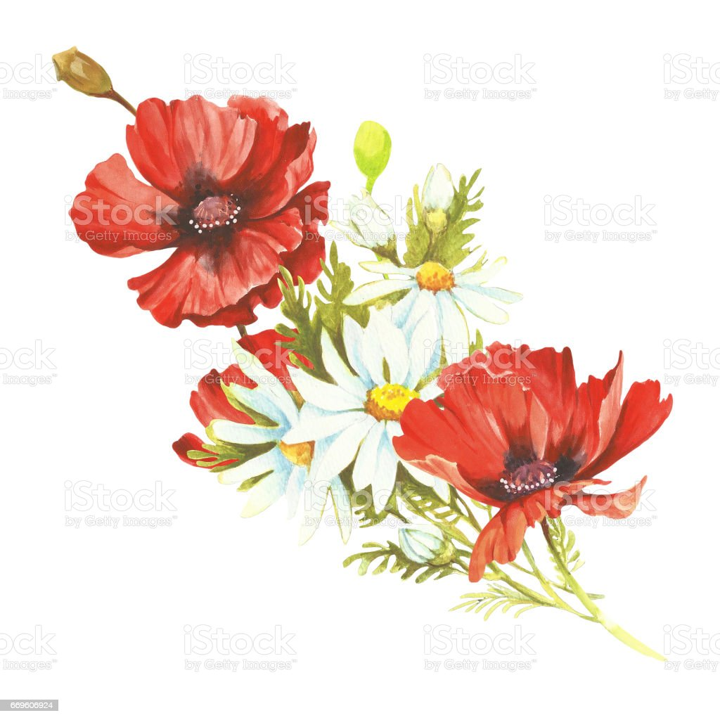 Bouquet with poppies and chamomiles. Hand draw watercolor illustration vector art illustration