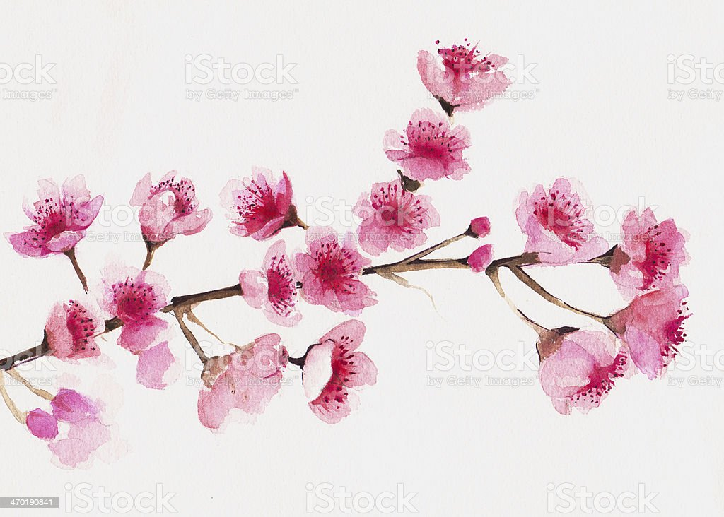 Branch of Cherry blossom tree. vector art illustration