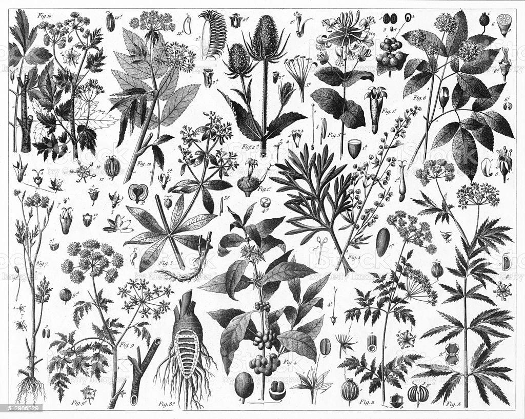 Brewed Tea Plants vector art illustration