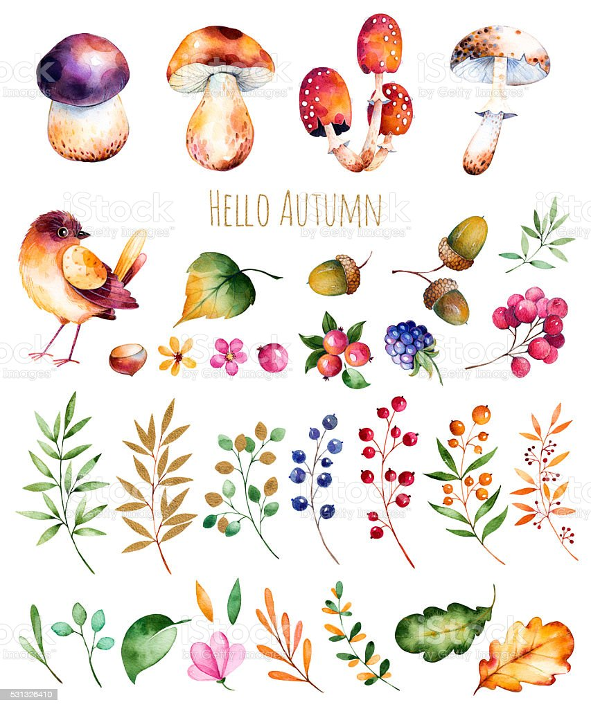 Bright collection with autumn leaves,flowers,branches,berries,acorns,blackberries vector art illustration