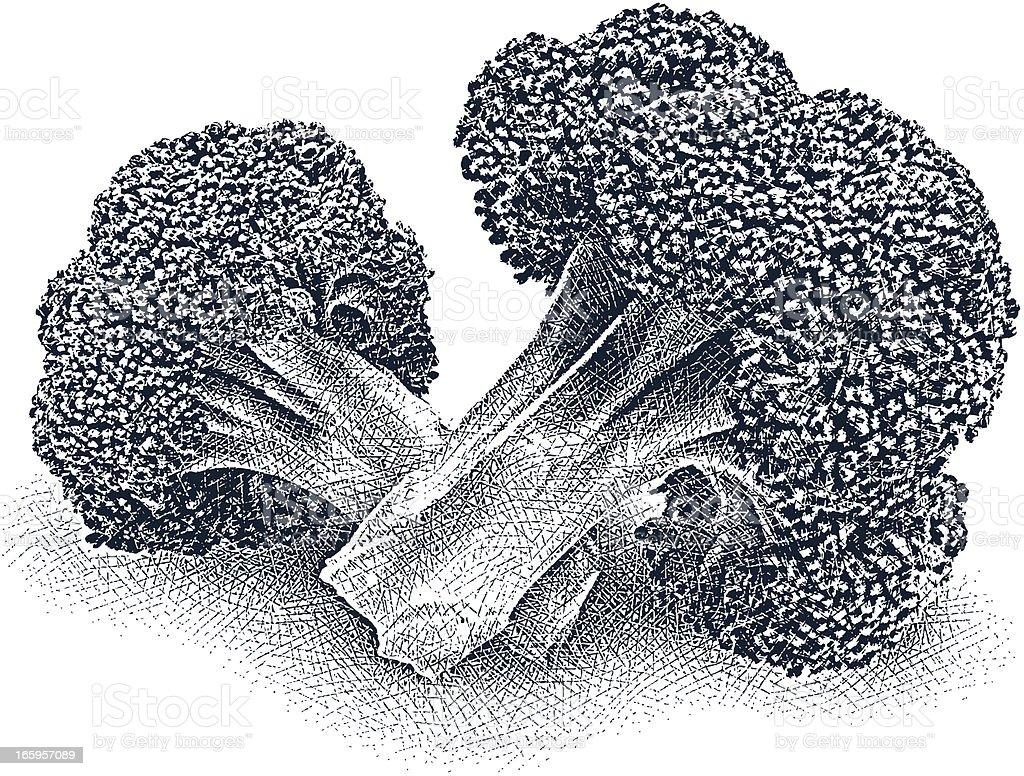 Broccoli Florets vector art illustration