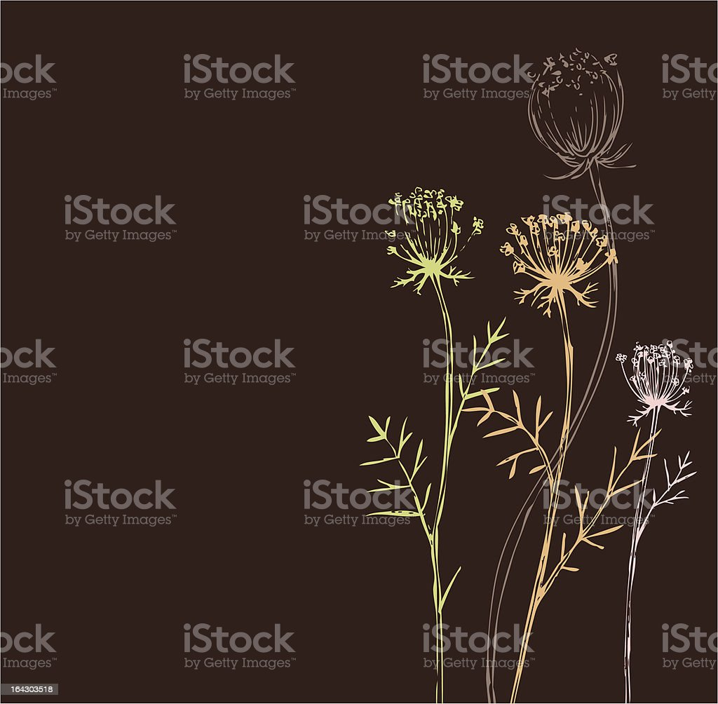 Brown Weeds_Queen Annes Lace royalty-free stock vector art