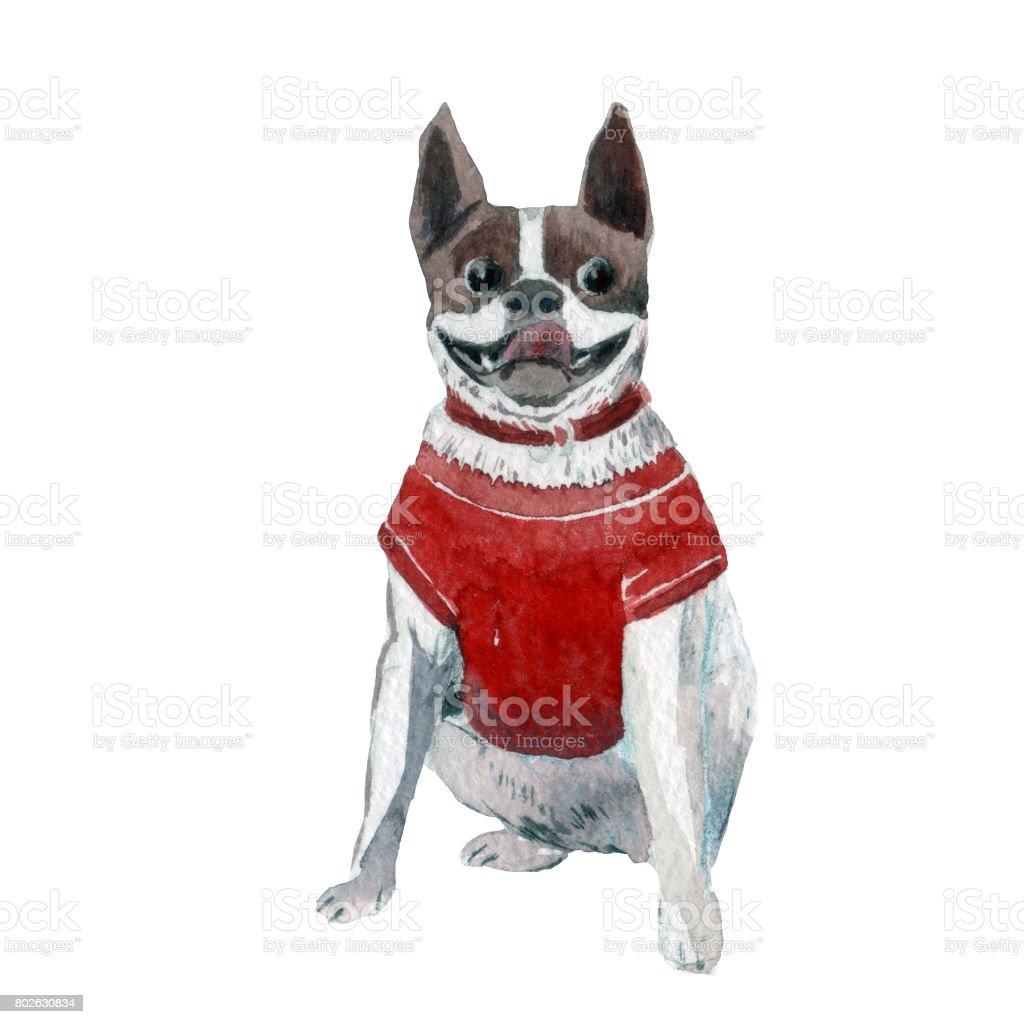Bulldog in red t-shirt vector art illustration