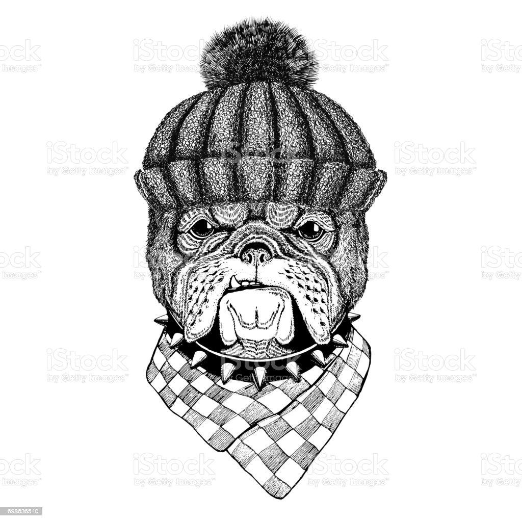 Bulldog wearing winter knitted hat vector art illustration