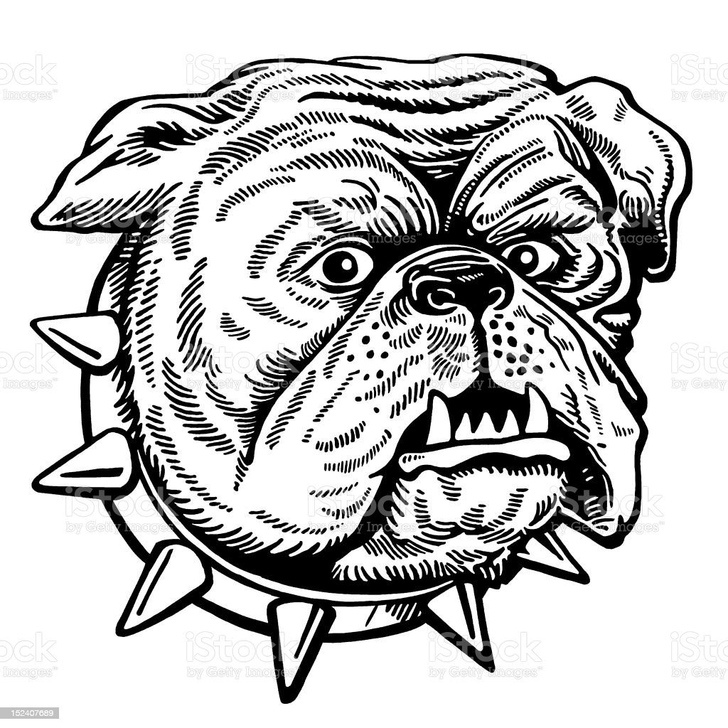Bulldog With Spiky Collar royalty-free stock vector art