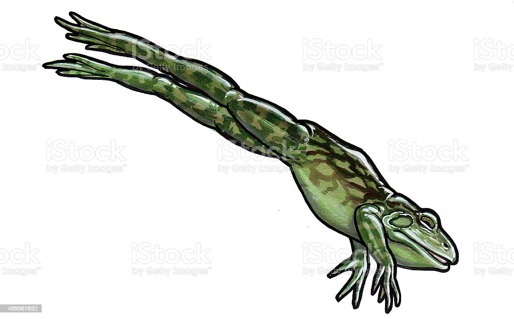 Ochsenfrosch Jumping - Lizenzfreies vektor illustration