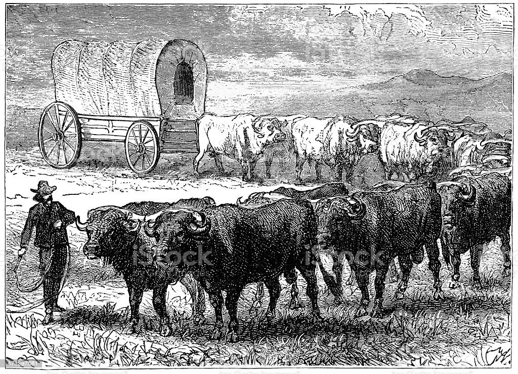 Bullock team on the North American prairies royalty-free stock vector art
