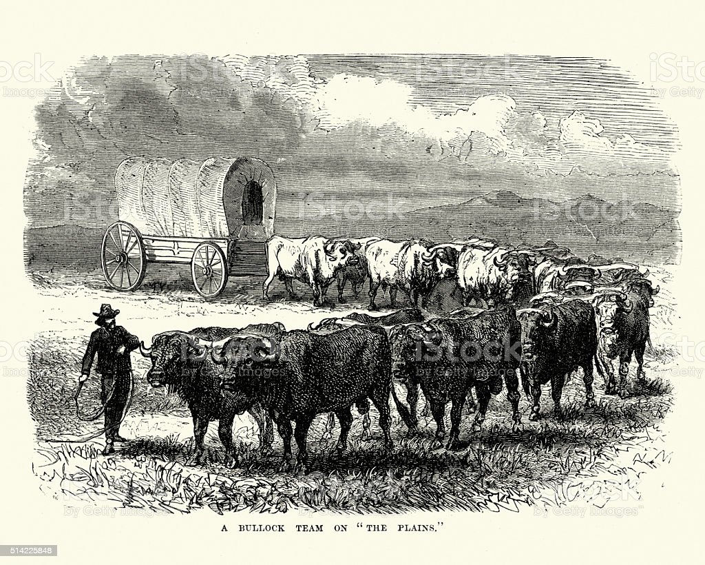 Bullock team pulling a covered wagon, 19th Century vector art illustration