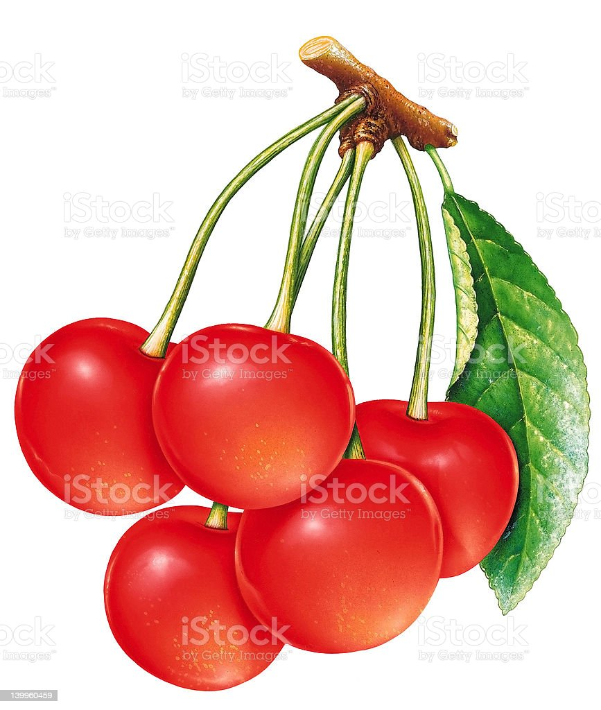 Bunch of cherries vector art illustration