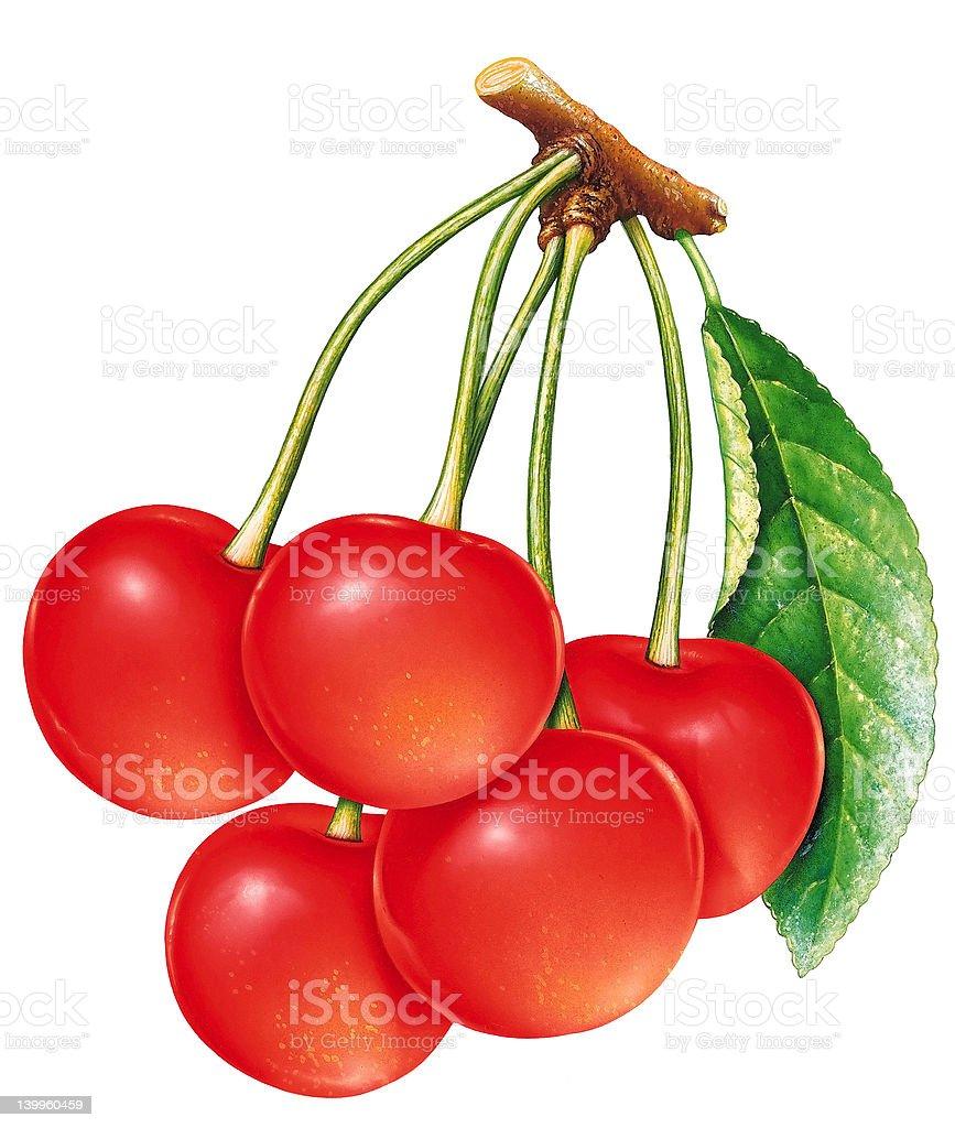 Bunch of cherries vector art illustration