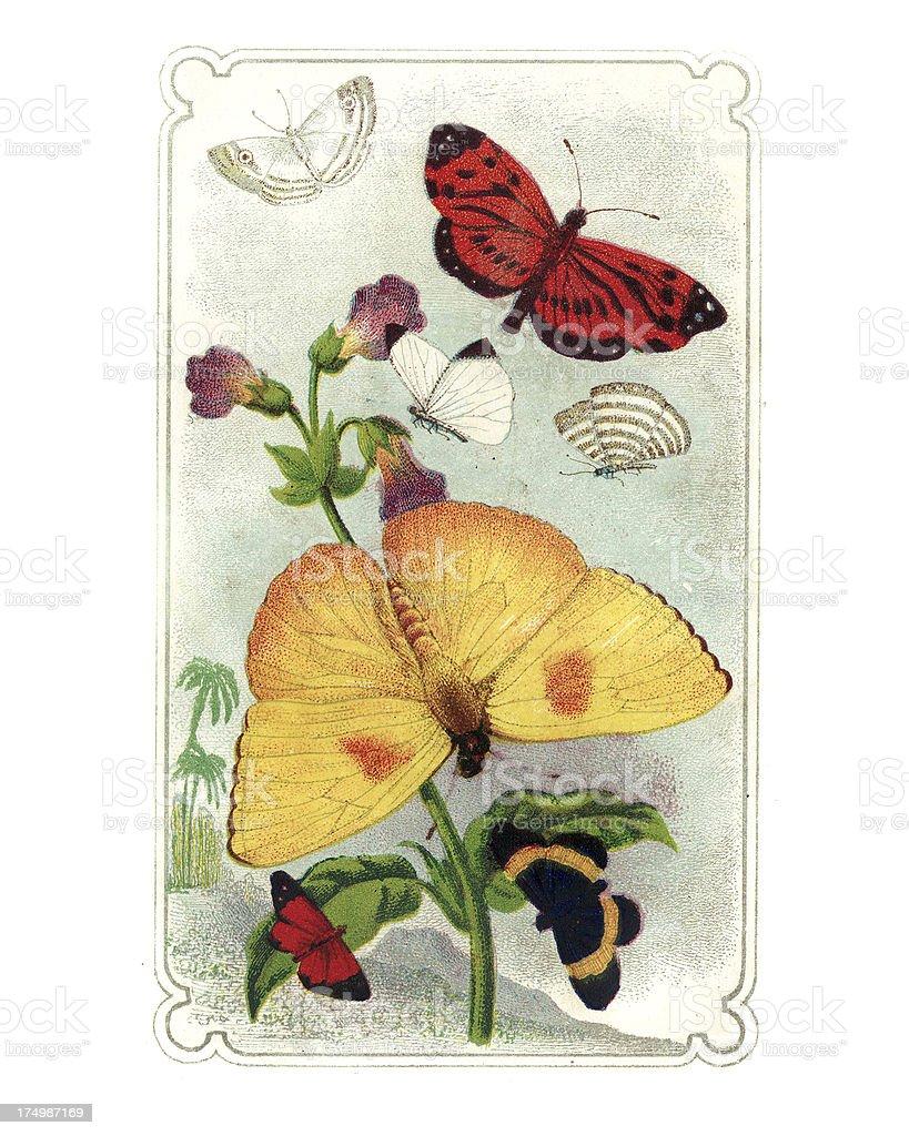 Butterflies Engraving royalty-free stock vector art
