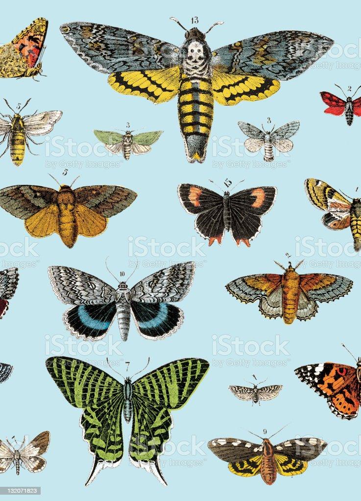 Butterflies royalty-free stock vector art