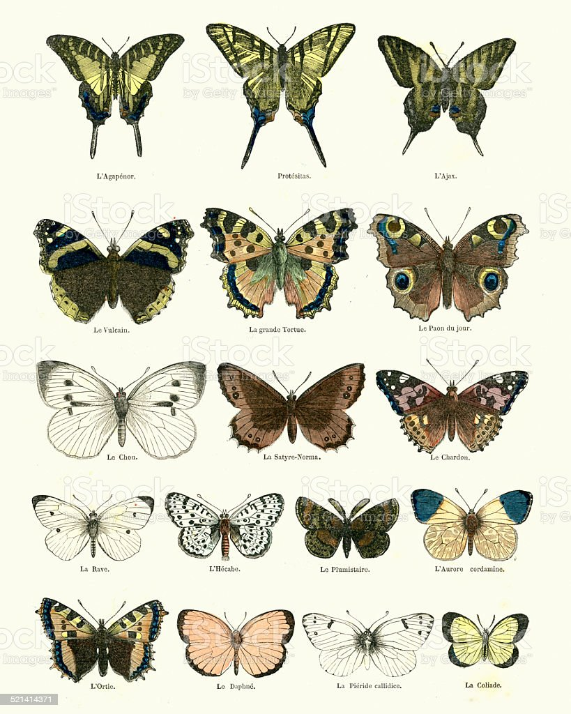 Butterlies vector art illustration