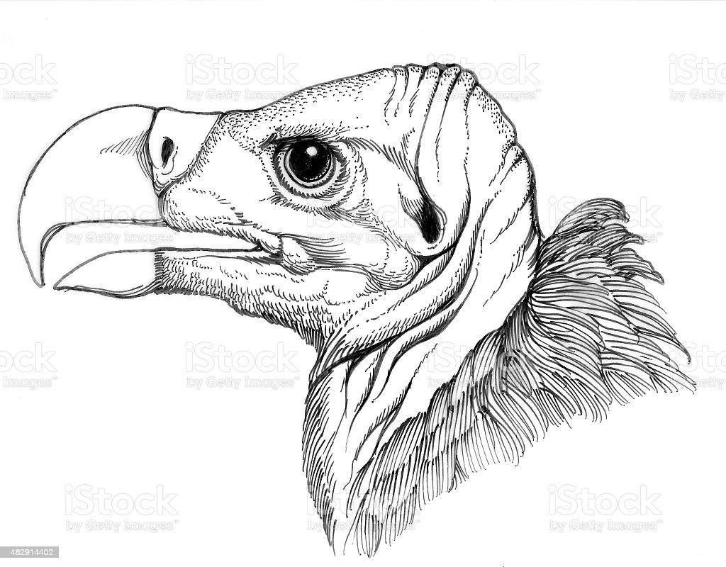 Geier Head Lizenzfreies vektor illustration