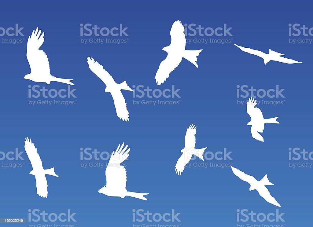 Buzzards vector art illustration