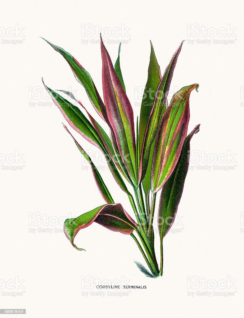 Cabbage palm house plant vector art illustration