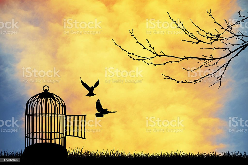 Cage for bird vector art illustration