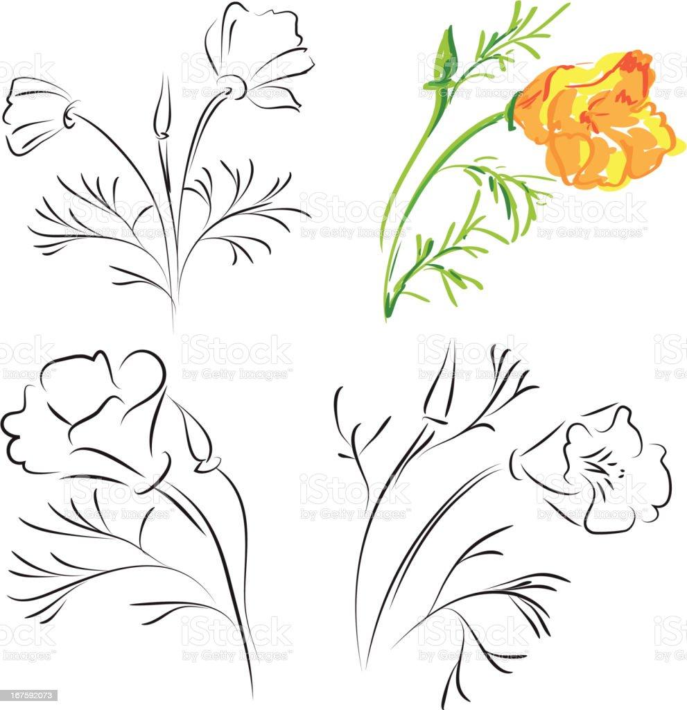 California poppy royalty-free stock vector art