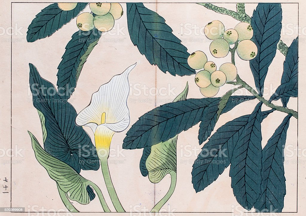 Calla lilly and Loquat tree japanese woodblock print vector art illustration